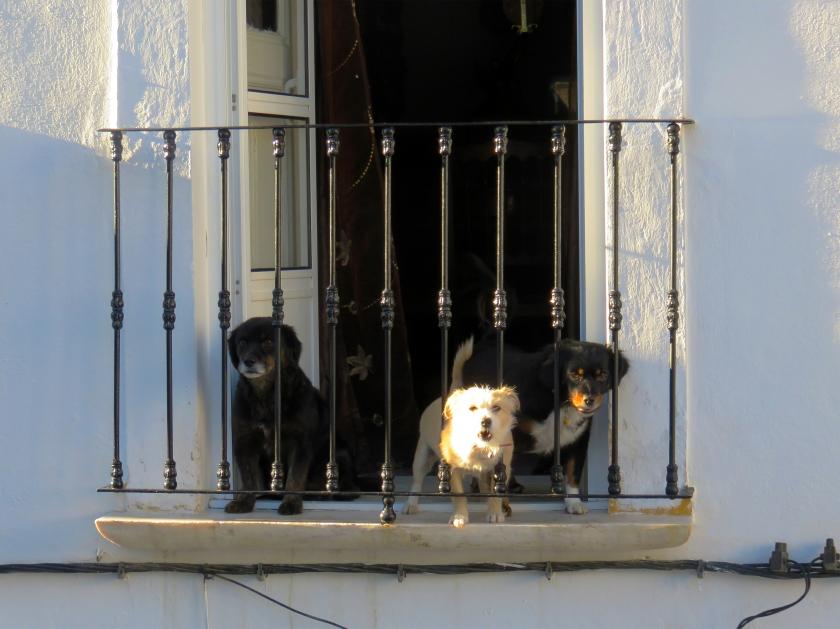Cães varanda
